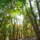 森の中(佐世保)