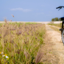 沖縄の旅2 石垣島