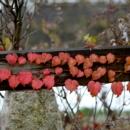 ハート型の葉っぱの紅葉