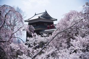 上田城桜祭りSAUKRA FESTIVAL in Ueda Castle (Nagano)