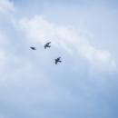 千曲川の鳥さんたち 鳩