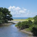 桃里付近の川と海とマングローブ