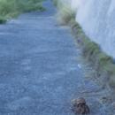 白保 ヤドカリの夕方散歩