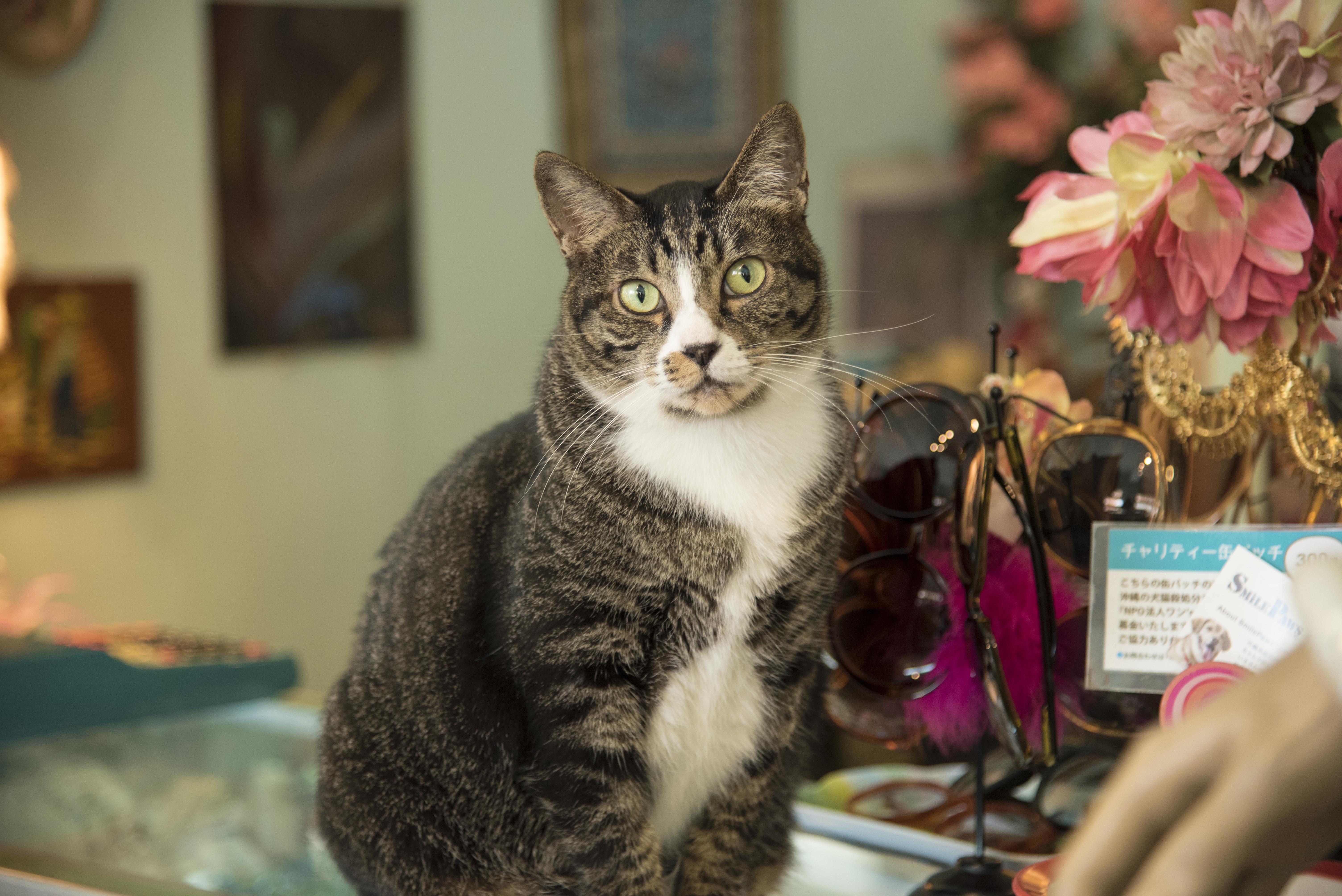 浮島通りの古着屋の猫